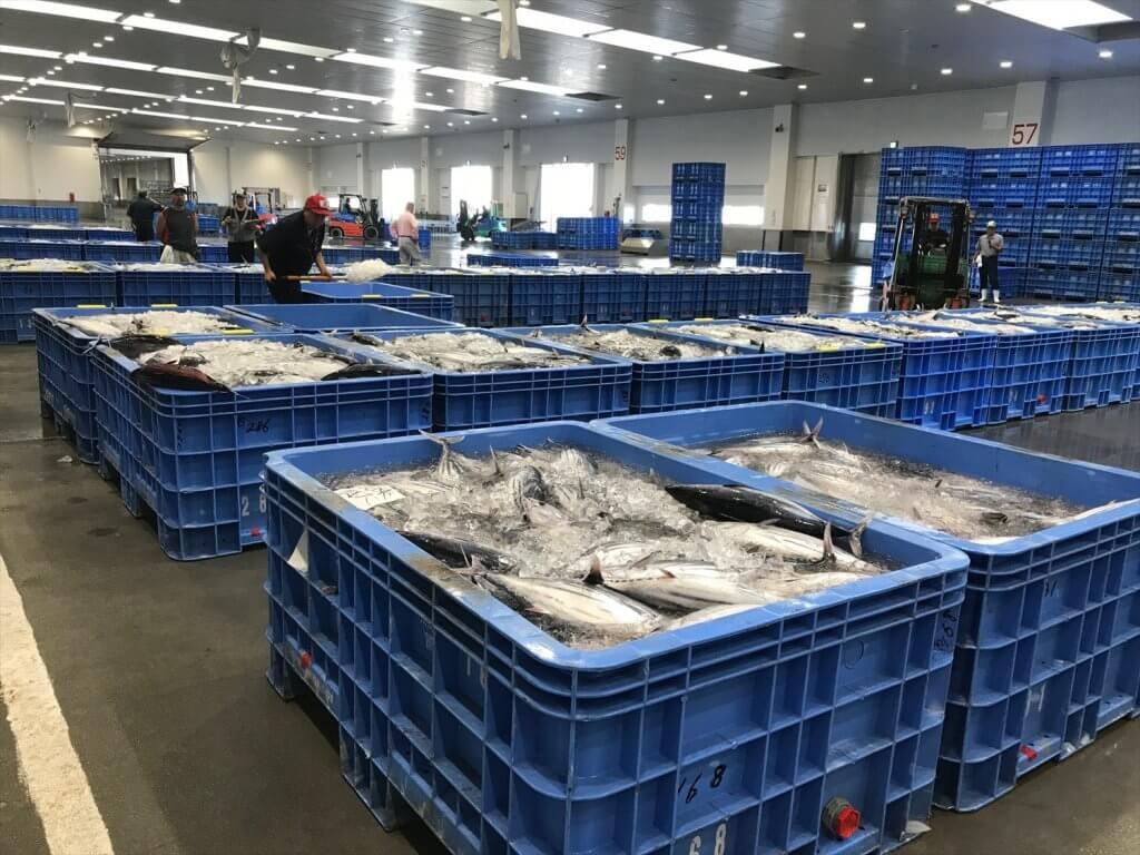 衛生管理施設充実の石巻魚市場に水揚げされた金華かつお