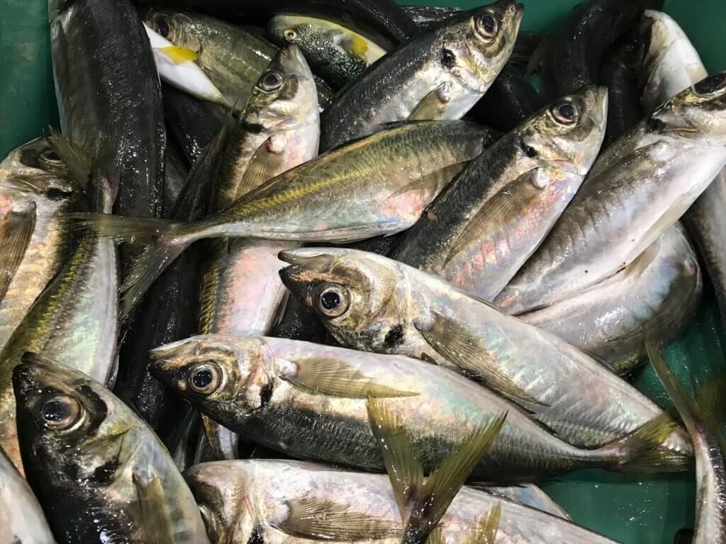 衛生管理施設充実の石巻魚市場に水揚げされた魚
